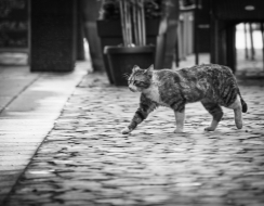 14755 foto  Street photography cat