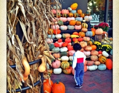 5156 foto  Pumpkins patch
