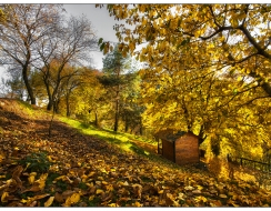 10759 foto  autunno (hdr)